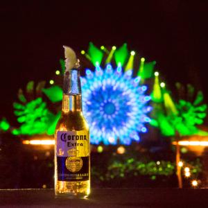 Corona Hamburg