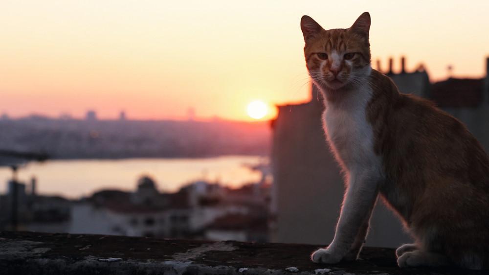 Kedi Von Katzen Und Menschen
