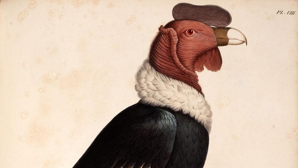Humbold-Ausstellung-Zoologie-c-Universitaet-Bern-Zentralbibliothek