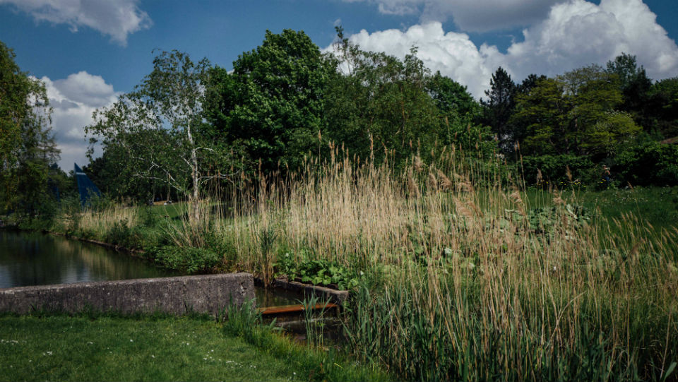 Der Loki-Schmidt-Garten-c-MASSIMO TEALDI