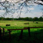 Naturschutzgebiet-Hoeltigbaum-c-Massimo-Tealdi