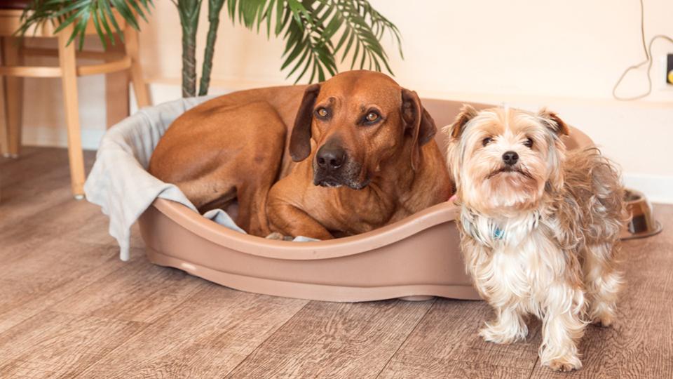 harburg-huus-hunde