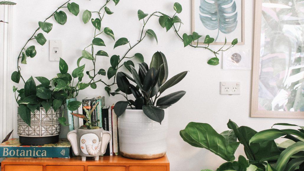 pflanzen-c-prudence-earl-unsplash