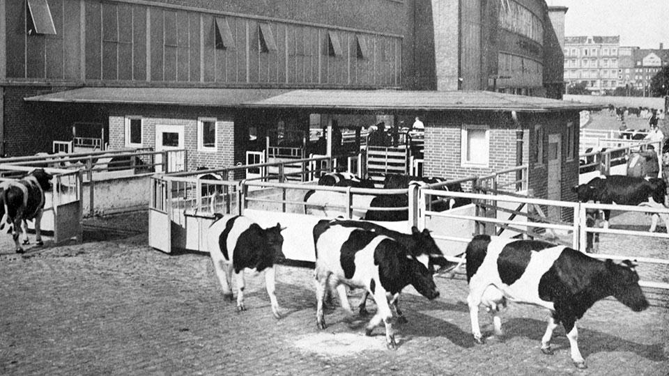 rindermarkthalle-hamburg-ausstellung-geschichte