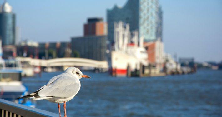 Hamburg; Foto: Adobestock