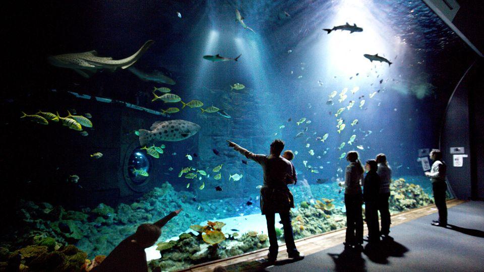Große Haie, kleine Fische und vieles mehr gibt es im Tropenaquarium bei Hagenbeck (Foto: Hagenbeck)